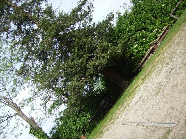 Villa padronale con parco e 4 ha di terreno da ricostruire (Teodorano – Meldola – Fo)